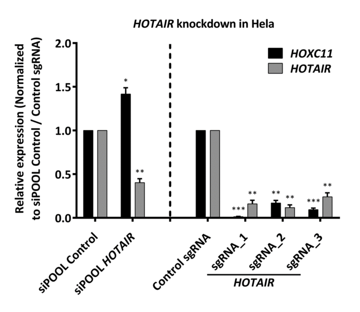 HOTAIR downregulation by CRISPR and siPOOL